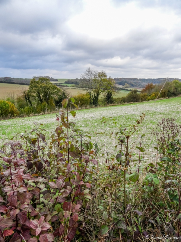 Autumn in the Picardie